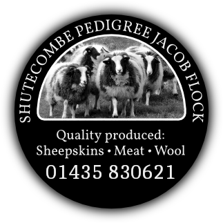 Shutecombe Pedigree Jacob Flock